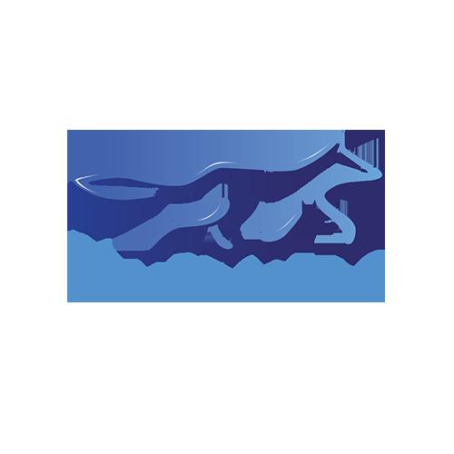 Bluefox.io company logo