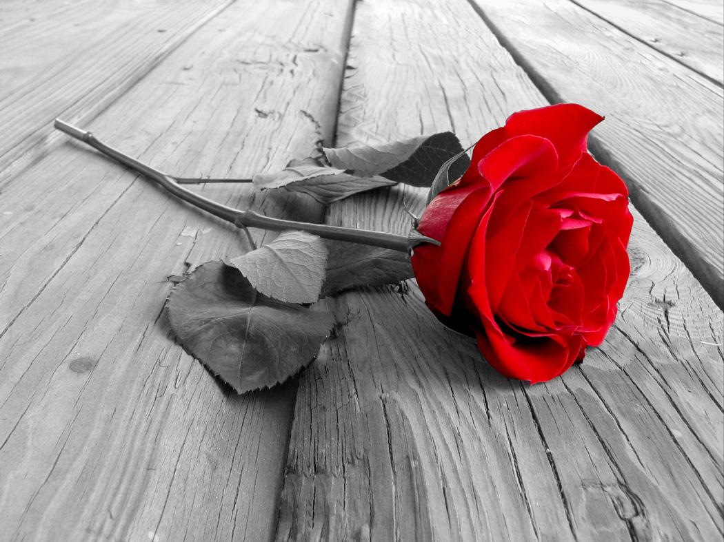 Rose On Wood BW