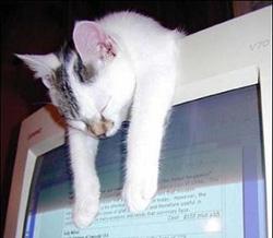 productive-cat