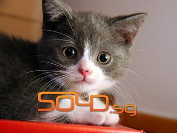cat-sold-singapore