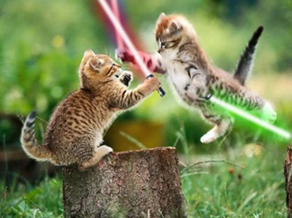 cat-war-wahaha