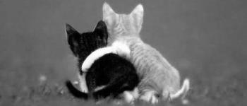 kitten-hug