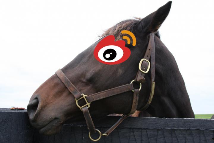 horse head sina weibo