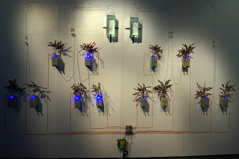 A project at Lifepatch combining art with science. Photo: Lifepatch
