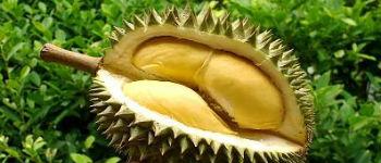 durians FI
