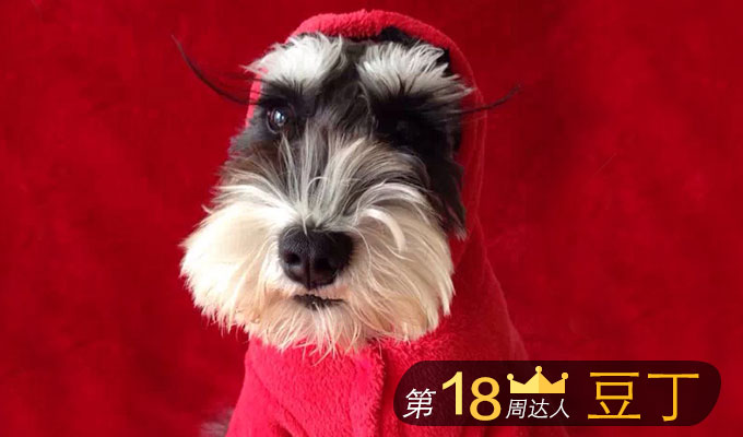 Chinese social network for pets SmellMe raises $6M funding