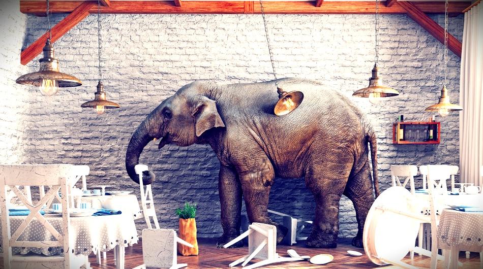 funding, secret, elephant, room,