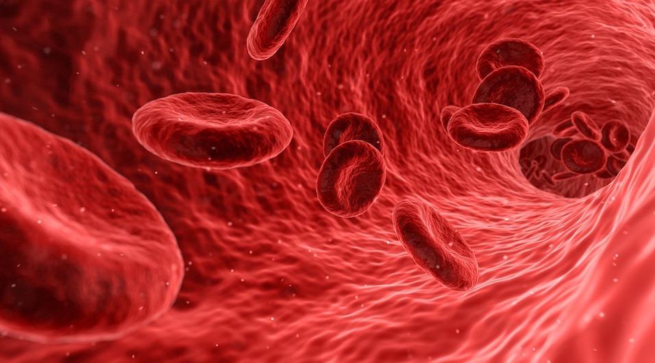 blood-cells-sigtuple