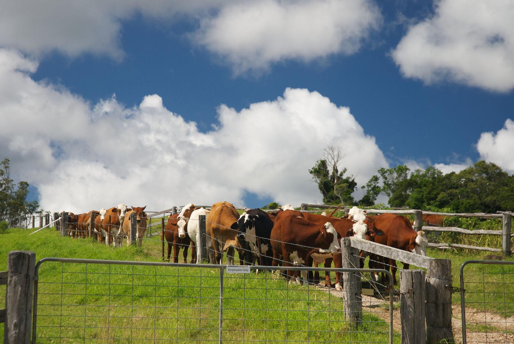 Farm dating in Sydney