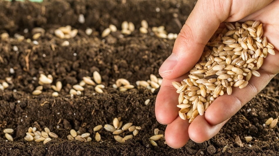 Seeds in hand, seed investment